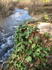 Natura a 360* (esterinaeliseo1) Tags: justnature natura fiumi acqua