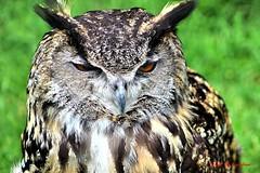 (65) Liberty's Owl Raptor & Reptile Centre