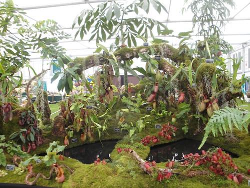 Borneo Exotics 1
