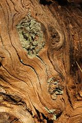 Alien Face (gripspix (X-mas Break Family first)) Tags: wood texture nature decay natur weathered holz verwittert textur vergammelt vision:outdoor=0716 20140311