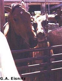 Kinship Circle - 2007-10-07 - Horse Slaughter 02