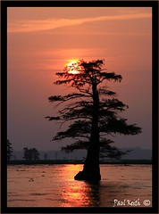 Southern Comfort (SisPau Images) Tags: sunset sky lake reflection tree nature water clouds sunrise canon paul outdoors photography eos dawn landscapes photo photographer dusk framed keith images professional bayou cypress caddo 2007 signed caddolake paulkeith mywinners anawesomeshot aplusphoto ultimateshot onlyyourbestshots copyrightedbypaulrkeithallrightsreservednounauthorizedusageallowed llovemypic sispau