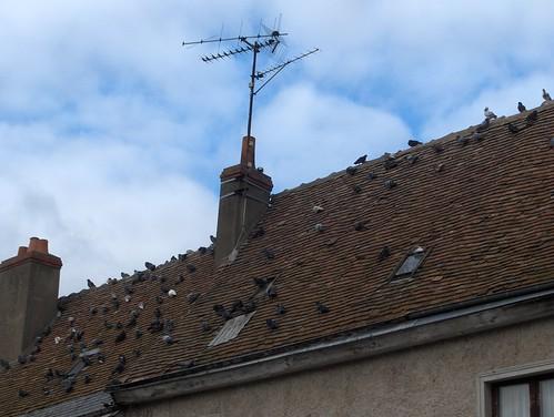 Toit avec maints pigeons