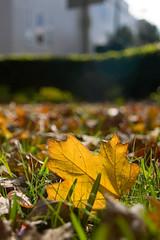 Fall into Autumn (olvwu | 莫方) Tags: park autumn usa fall ga square leaf ground savannah fallenleaf jungpangwu oliverwu oliverjpwu olvwu jungpang 莫方 吳榮邦