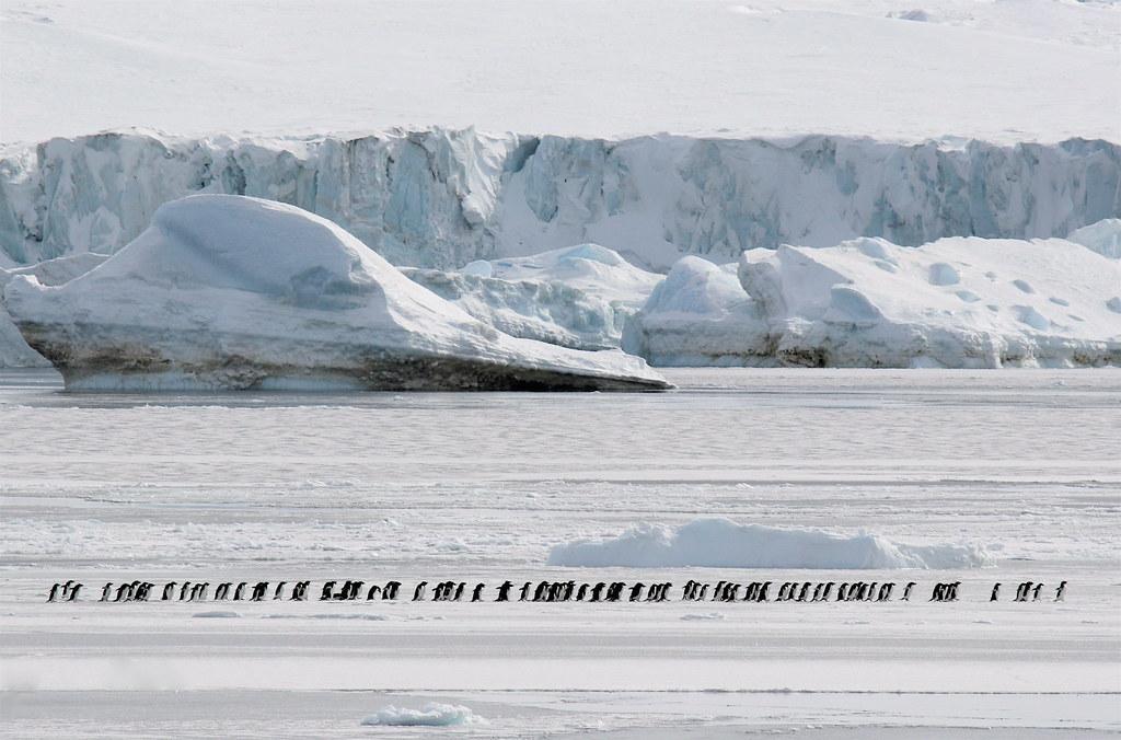 Pingüinos dominó
