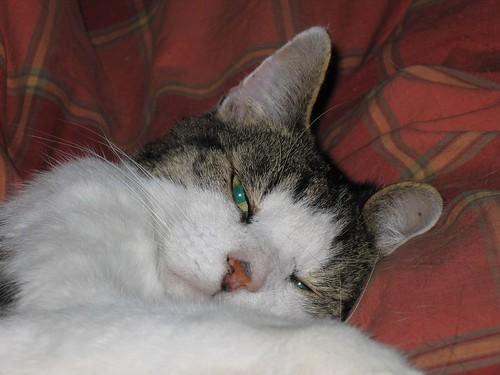 Comfy Brodie