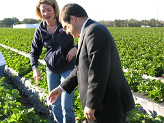 Rep. Bilirakis Discusses Crops Damage with Kristen Hitchcock of Parkesdale Farms in Plant City, Fla.