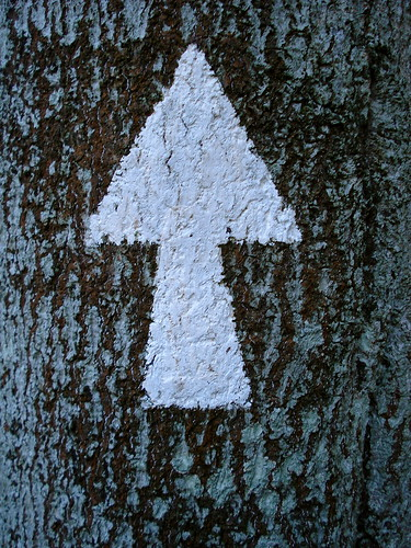 Arrow up the tree