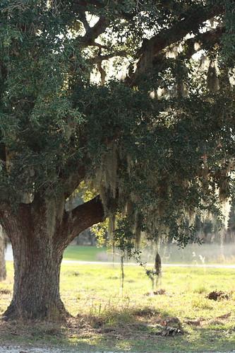 kissimmee prairie state park 1-12-08 114