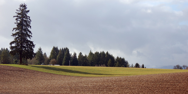 tree_fields