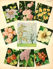 fleurs n35