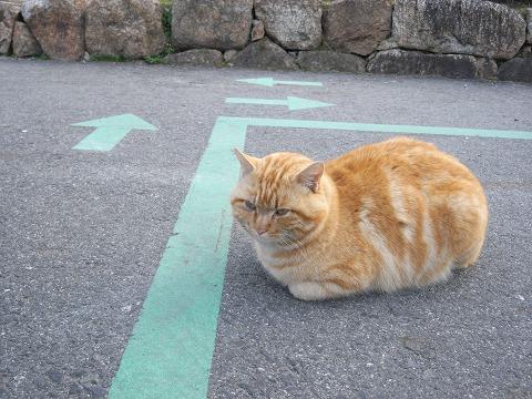石舞台古墳の猫-03
