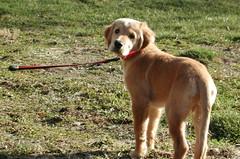 Cason Puppy