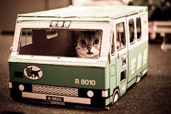 [フリー画像] [動物写真] [哺乳類] [ネコ科] [猫/ネコ] [クロネコヤマト]      [フリー素材]