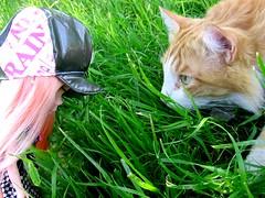 Prowlers. (svohljott) Tags: cat doll eden blythe showdown sbl mrb mademoisellerosebud thishatbelongstonicole
