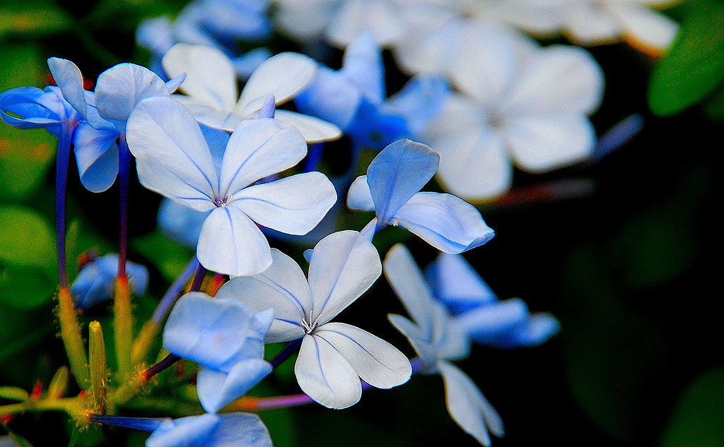Blue Flowers for Blue Monday