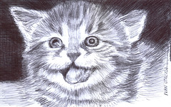 gatito a lapicero (ivanutrera) Tags: gato gatito sketch sketching draw dibujo drawing dibujoalapicero boligrafo animal ilustracion cat lapicero pen felino minino drawballpointpen dibujoaboligrafo