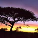 Amanecer en Serengeti - Tanzania