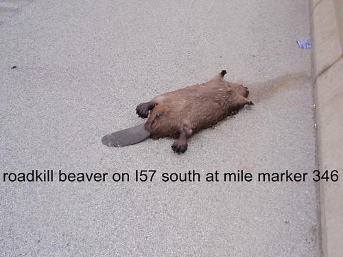 deadbeaver