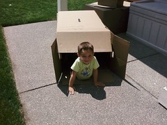 whats more fun than a cardboard box?