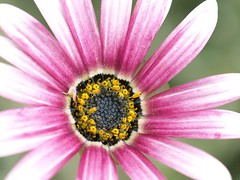 Flower (26)