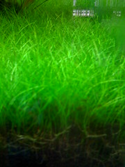 sanfrancisco city plants grass aquarium