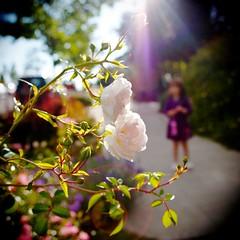 If I had a Holga . . (Jeff Engelhardt) Tags: seattle white blur color film rose contrast canon holga child random elena saturation flare vignette defective notfilm 40d wannabefilm jeffengel jeffengelhardt