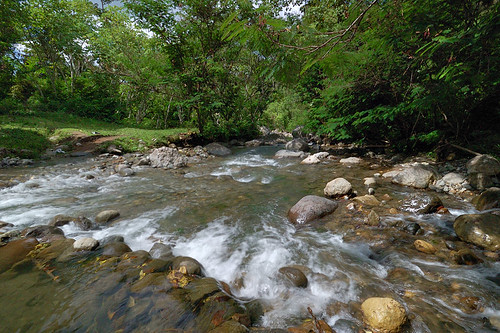 Sepaka Wide Stream