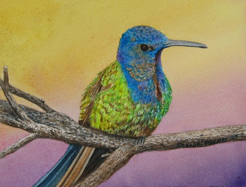 farberswallow-tailed hummingbirdsmaller
