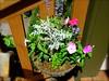 Annuals (boisebluebird) Tags: flowers summer plants flower beauty garden design flora gardening boise patio fiore luxury gardendesign michaeltoolson boisebluebirdcom httpwwwboisebluebirdcom boiselandscaping boisegardener