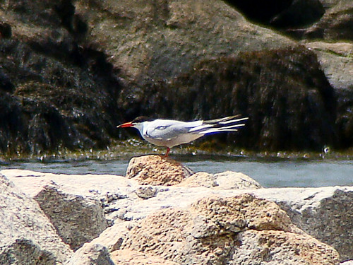 4th commontern