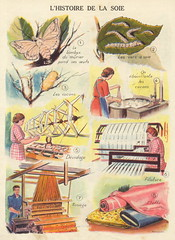 L'histoire de la soie