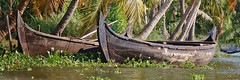 Backwater trip in Alleppey (SavStar) Tags: india kerala backwater alleppey