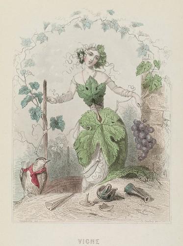Vigne - Les Fleurs Animées - JJ Grandville