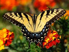 _DSC5308 (pnther60) Tags: backyard roanoke floraandfauna