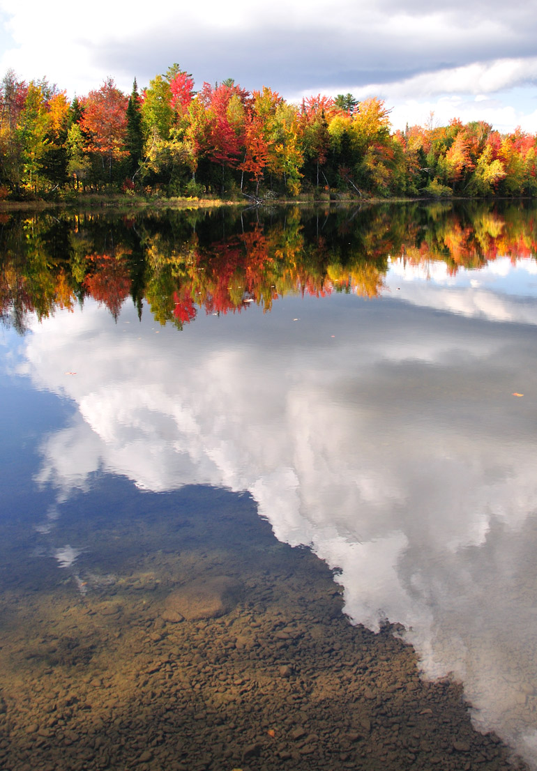 stump_pond_reflection_0165