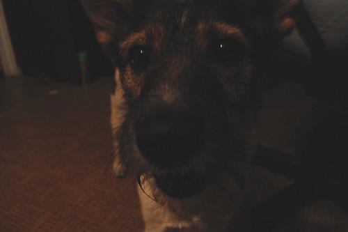 Dog 2