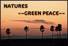 THE NATURES ~~GREEN PEACE~~