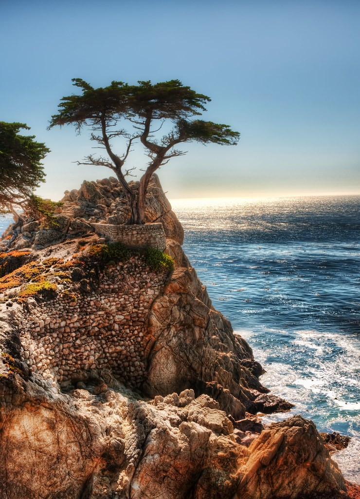 The Lone Cypress - a drive down Highway 1 from San Francisco to San Diego