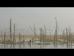 Early Morning Fog (these are only words) Tags: usa birds fog alaska landscape mood unitedstates baldeagle earlymorning swamp favourite raven ghostforest theseareonlywords