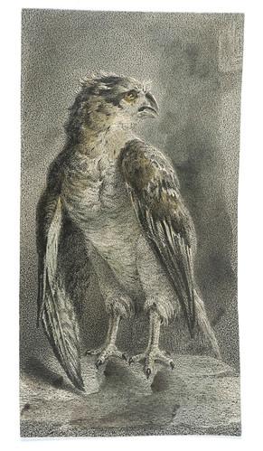014- Aguila-Cyprian Kamil Norwid- 1821-1883