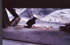 Scan10265 (lucky37it) Tags: e alpi dolomiti cervino