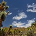 Blue Skies with Wisps of Clouds Above the Sonora Desert