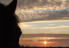 Happy--Emotion (Marie Jestin) Tags: horse sea sunset sky cheval ciel coucher de soleil eau water océan mer mar