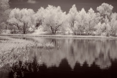 Reflections on Dark Water (arubio10) Tags: infrared leaves branches trees darkwater sky clouds