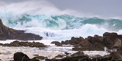 Storm Brews - Pacific Grove, CA (Ian P. Miller Photography) Tags: pacificgrove california pacificocean storm winter waves water elnino