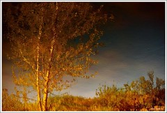 Ensemble...!!! (Denis Collette...!!!) Tags: trees wild canada reflection tree reflections river photo couple quebec photos duo rivire safari reflet arbres qubec rivers both walden impressions collette arbre reflets photosafari impression impressionist denis sauvages twosome soulmates thoreau sauvage impressionists rivires portneuf wildrivers wildriver impressionistes impressionniste deniscollette pontrouge riviresauvage messoeurs riviressauvages photossafari
