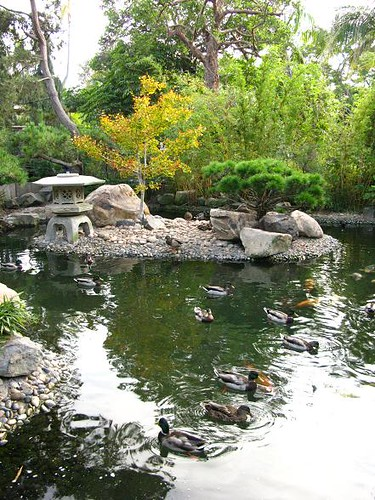 Japanese garden with a pond