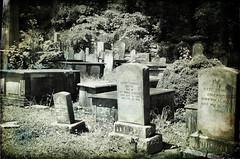 Brick Church Cemetery Texture
