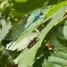 Un insetto dalle antenne lunghe